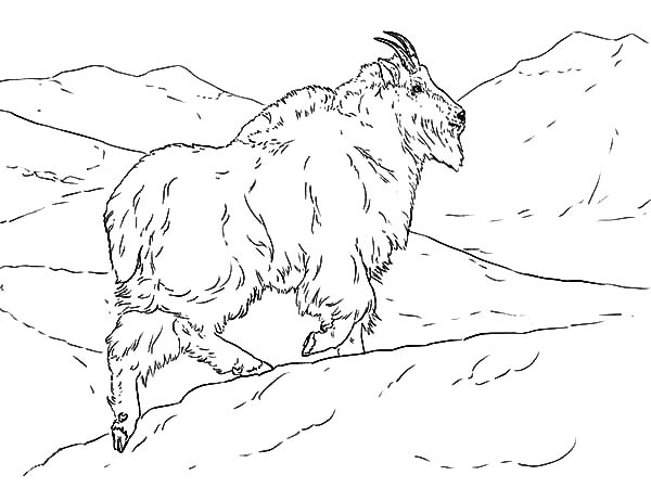 Mountain Goat, : Mountain Goat Climbing a Hill Coloring Pages