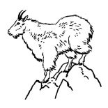 Mountain Goat, Mountain Goat Coloring Pages For Kids: Mountain Goat Coloring Pages for Kids