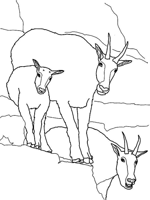 Mountain Goat, : Mountain Goat Family Coloring Pages