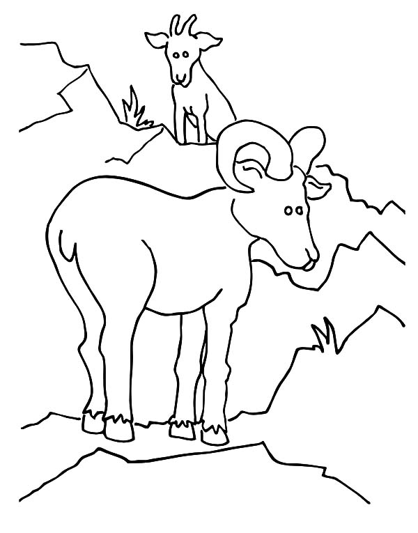 Mountain Goat, Untitled Coloring Page: Untitled