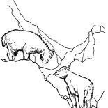 Mountain Goat, Mountain Goat Mating Coloring Pages: Mountain Goat Mating Coloring Pages