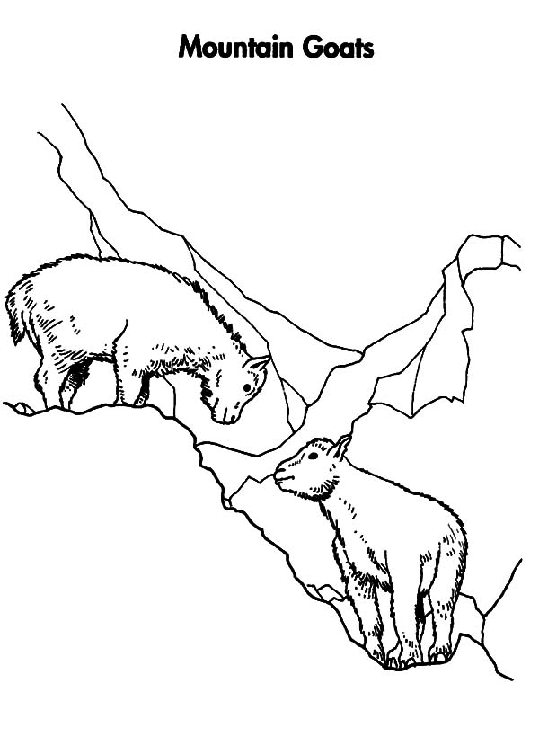 Mountain Goat, : Mountain Goat Mating Coloring Pages
