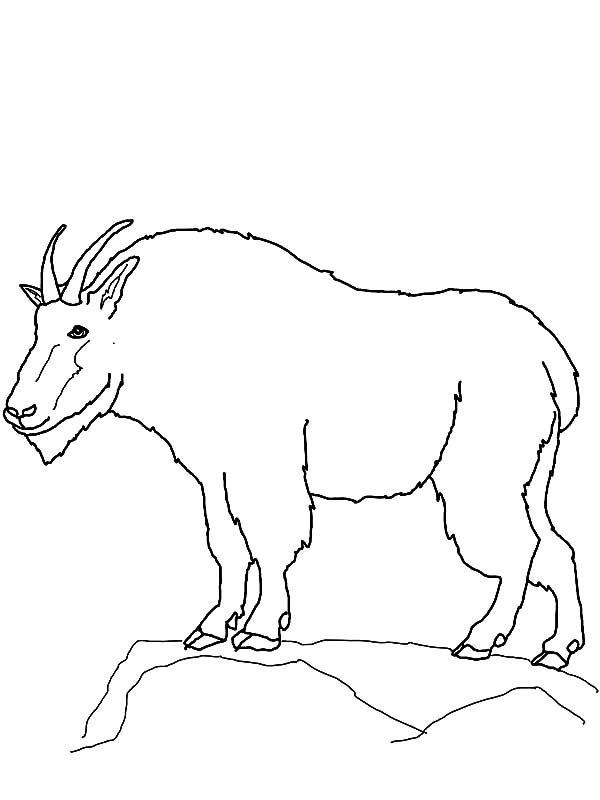 Mountain Goat, : Mountain Goat Outline Coloring Pages