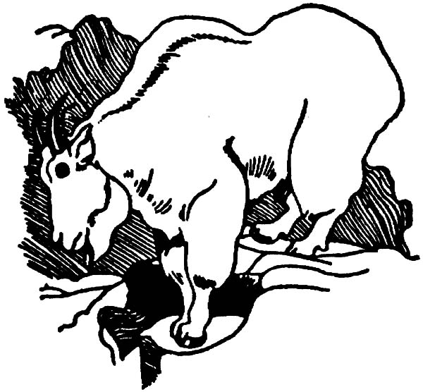 Mountain Goat, Mountain Goat Sketch Coloring Pages: Mountain Goat Sketch Coloring Pages