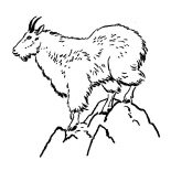 Mountain Goat, Mountain Goat Standing On Top Of Mountain Coloring Pages: Mountain Goat Standing on Top of Mountain Coloring Pages