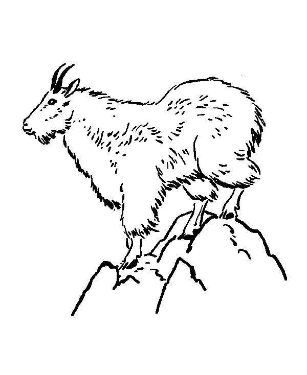 Mountain Goat, : Mountain Goat Standing on Top of Mountain Coloring Pages