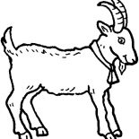 Mountain Goat, Mountain Goat Wearing Bell Coloring Pages: Mountain Goat Wearing Bell Coloring Pages