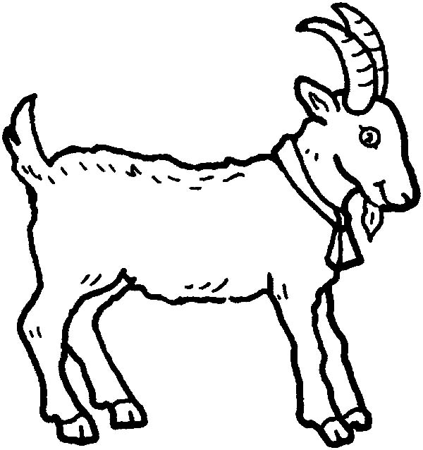 Mountain Goat, : Mountain Goat Wearing Bell Coloring Pages