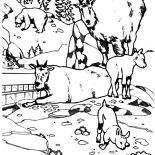 Mountain Goat, National Zoo Mountain Goat Coloring Pages: National Zoo Mountain Goat Coloring Pages