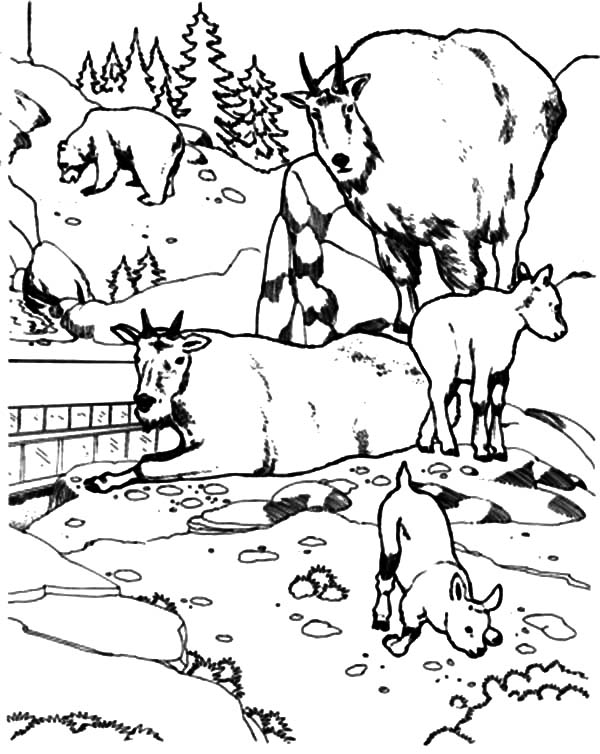 Mountain Goat, : National Zoo Mountain Goat Coloring Pages