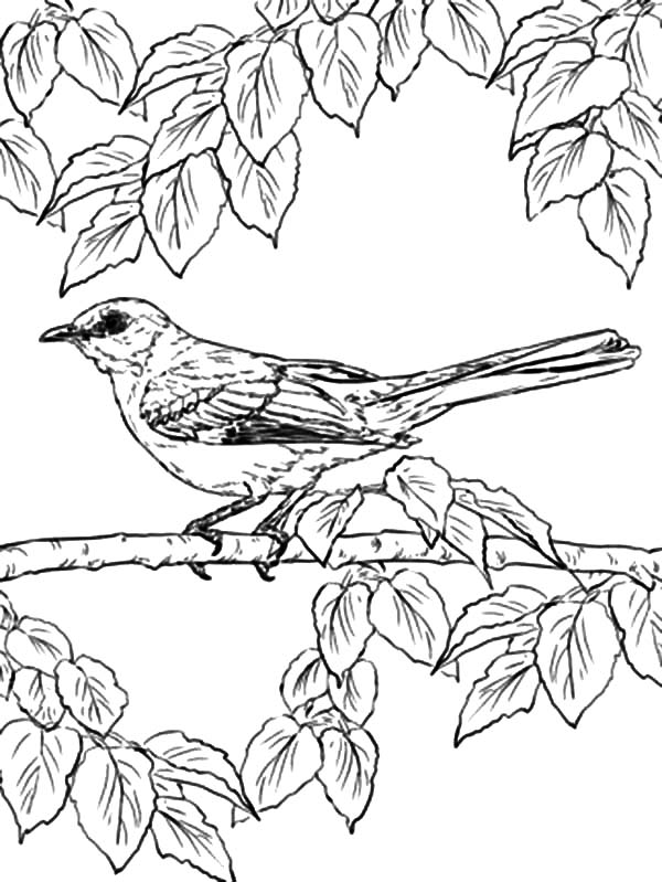Mockingbird, : Northern Mockingbird Lurking Under Leaves Coloring Pages
