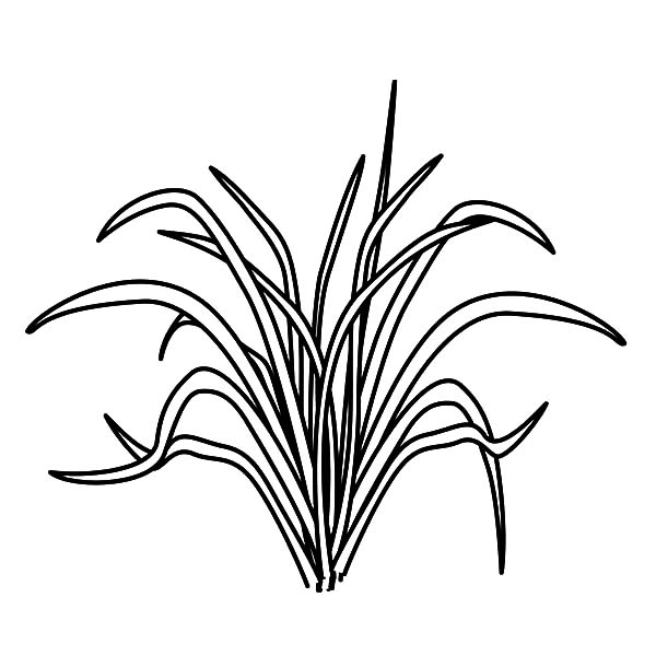 Grass, : Picture of Grass Coloring Pages