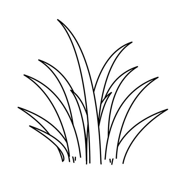 Grass, : Plants World Grass Coloring Pages
