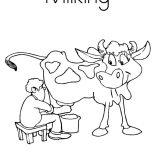 Milking Cow, Prechooler Milking Cow Coloring Pages: Prechooler Milking Cow Coloring Pages