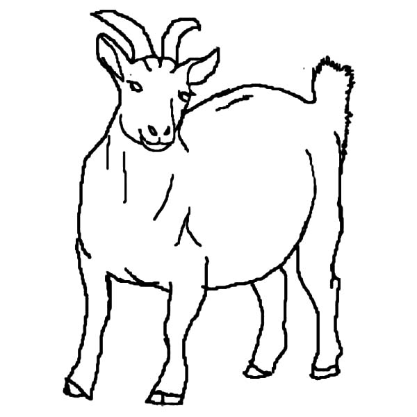 Goat, Pregnant Goat Coloring Pages: Pregnant Goat Coloring Pages