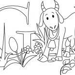Goat, Preschooler Kid Learn About Goat Coloring Pages: Preschooler Kid Learn About Goat Coloring Pages