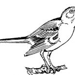 Mockingbird, Singing Mockingbird Coloring Pages: Singing Mockingbird Coloring Pages