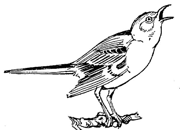 Mockingbird, : Singing Mockingbird Coloring Pages