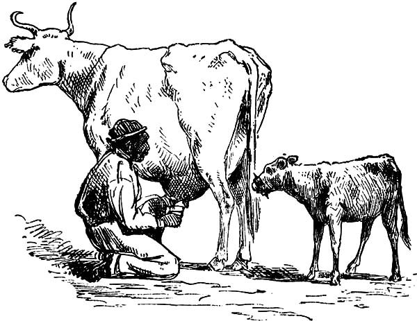 Milking Cow, : Sketch Farmer Milking Cow Coloring Pages