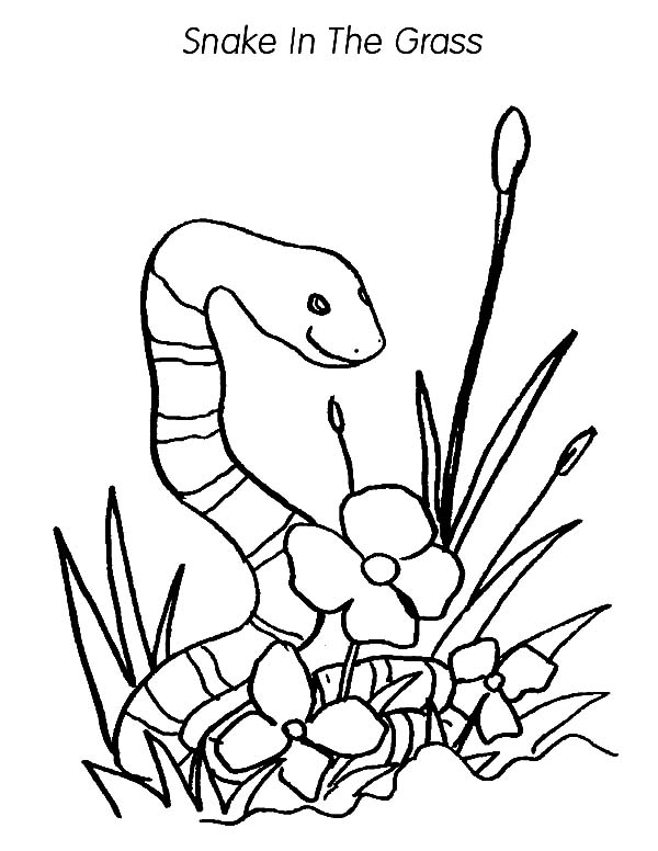 Grass, : Snake in the Grass Coloring Pages
