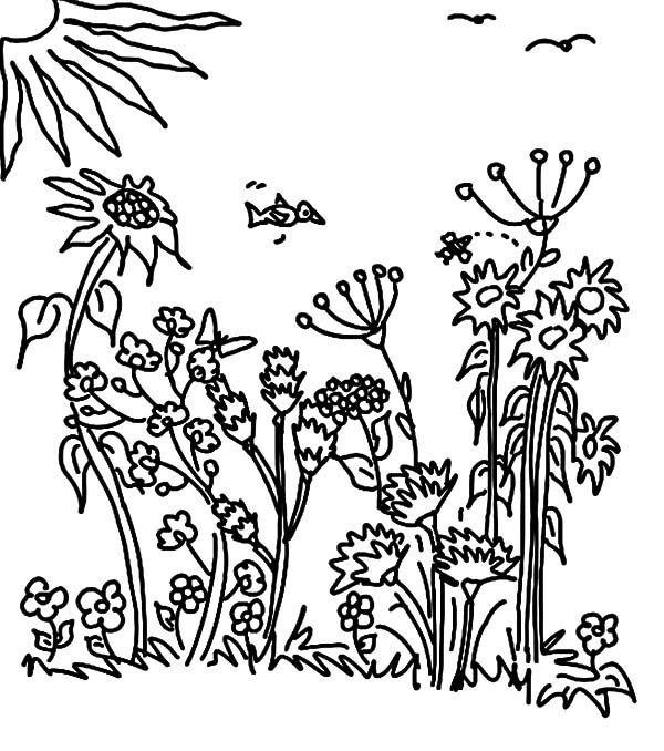 Garden, : Sunny Day Garden Coloring Pages