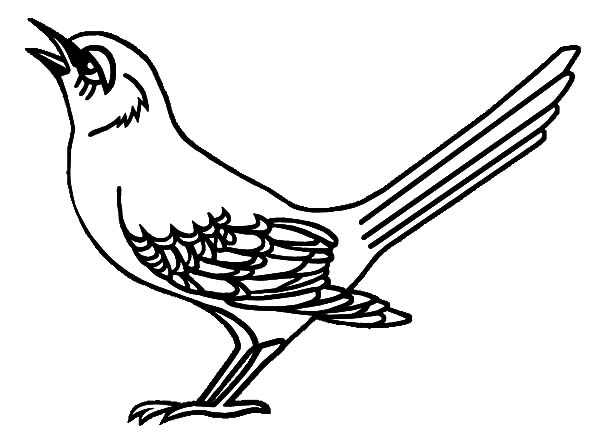 Mockingbird, : Tennessee Mockingbird is Singing Coloring Pages