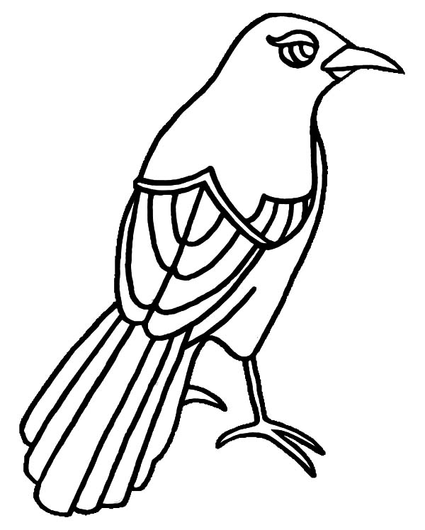 Mockingbird, : Texas Mockingbird Has Beautiful Eye Coloring Pages