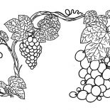 Grapes, Thrives Grapes Plant Coloring Pages: Thrives Grapes Plant Coloring Pages