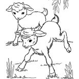 Goat, Two Goat Playing Ouside Coloring Pages: Two Goat Playing Ouside Coloring Pages
