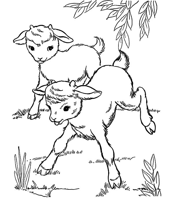Goat, : Two Goat Playing Ouside Coloring Pages