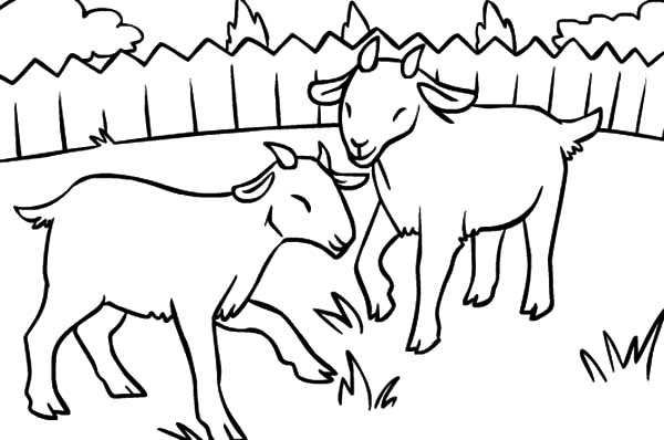 Goat, : Two Litte Goat Eating Grass Coloring Pages