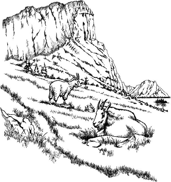 Mountain Goat, : Two Mountain Goat Relaxing Coloring Pages