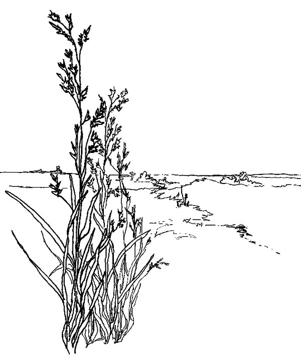 Grass, : Wild Grass Coloring Pages