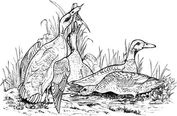 Vector of a Cartoon Mad Turkey Bird Chasing a Pilgrim - Coloring ... | 395x600