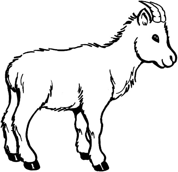 Goat, Wildlife Of Goat Coloring Pages: Wildlife of Goat Coloring Pages