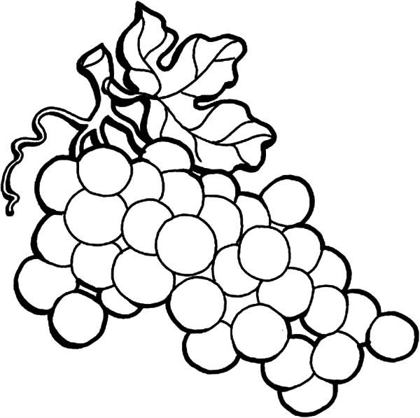 Wine Grapes On The Vine Coloring Pages Color Luna