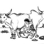 Milking Cow, Women Milking Two Big Cow Coloring Pages: Women Milking Two Big Cow Coloring Pages