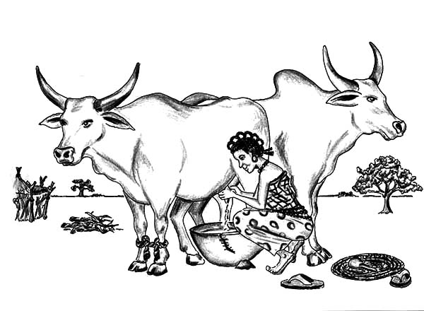 Milking Cow, : Women Milking Two Big Cow Coloring Pages